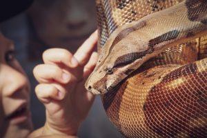 caresser un serpent