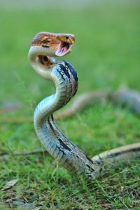 câliner son serpent