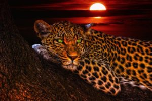 Léopard d'Afrique