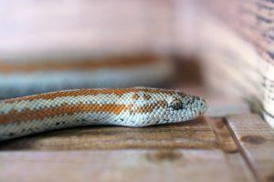 Régime Alimentaires typiques Serpent