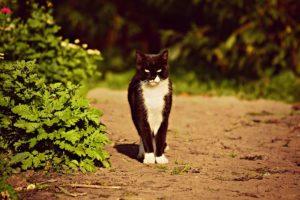 chace chat noir (chat noir santé)