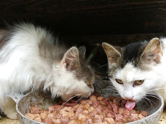 nourriture chat(quantité nourriture chat)