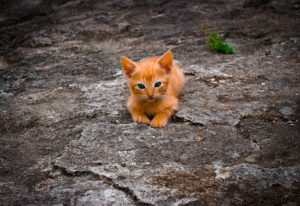nutrition chaton( nutrition petit chat)