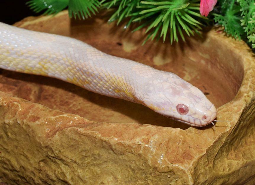comportement de serpent
