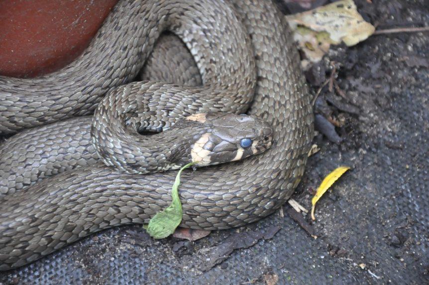 choix de serpent de compagnie