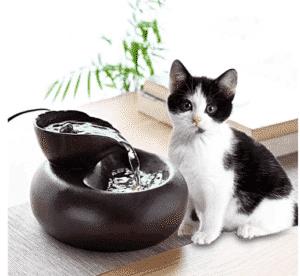 santé chat (santé chat robuste)