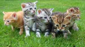 repas pour chat (bi nutrition chat quantité)