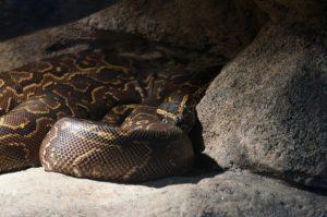 serpent venimeux du monde
