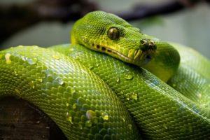serpent ou lezard