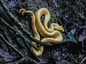 serpent qui fait caca