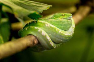 Serpent comment les faire fuir