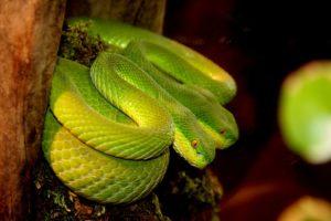nourrir un serpent