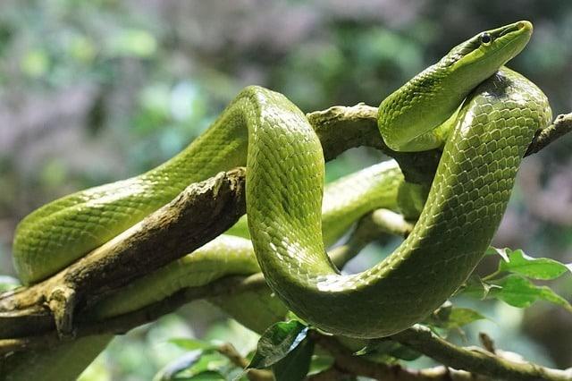 serpent santé