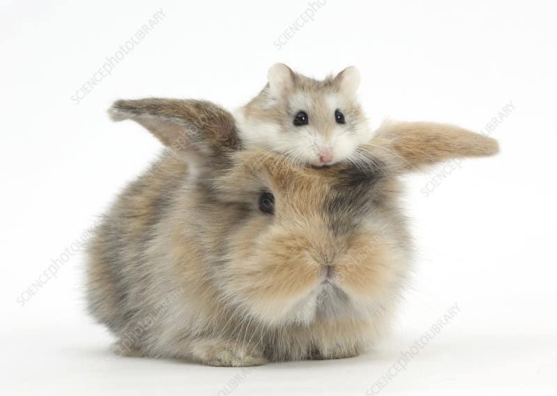hamster et lapin