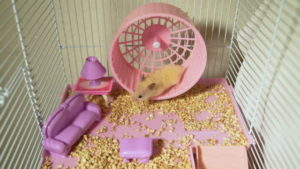 hamster ou souris
