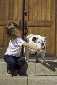 bulldog anglais pour les enfants