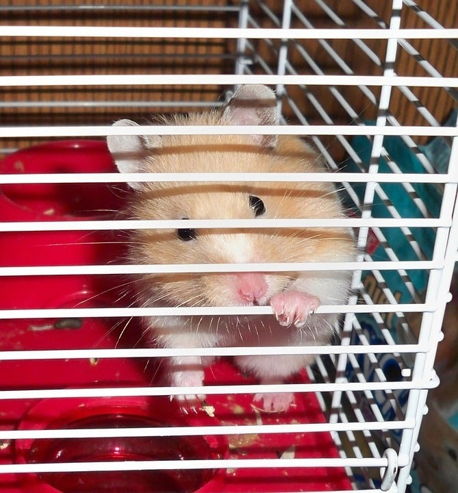 hamster ronge cage