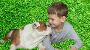 interaction d'un bulldog envers un enfant