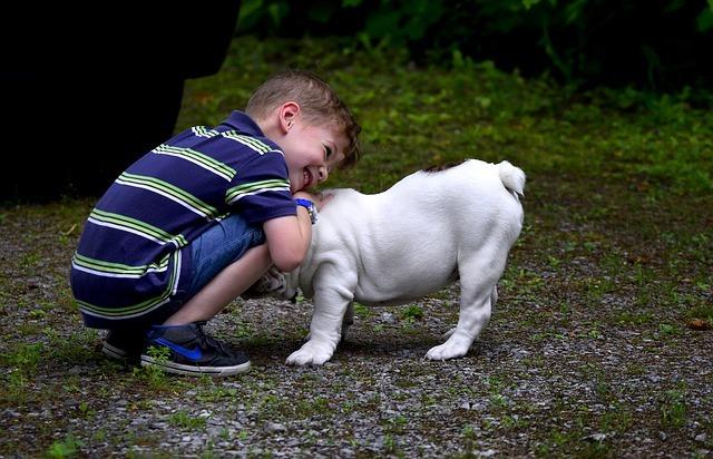 bulldog anglais et enfant