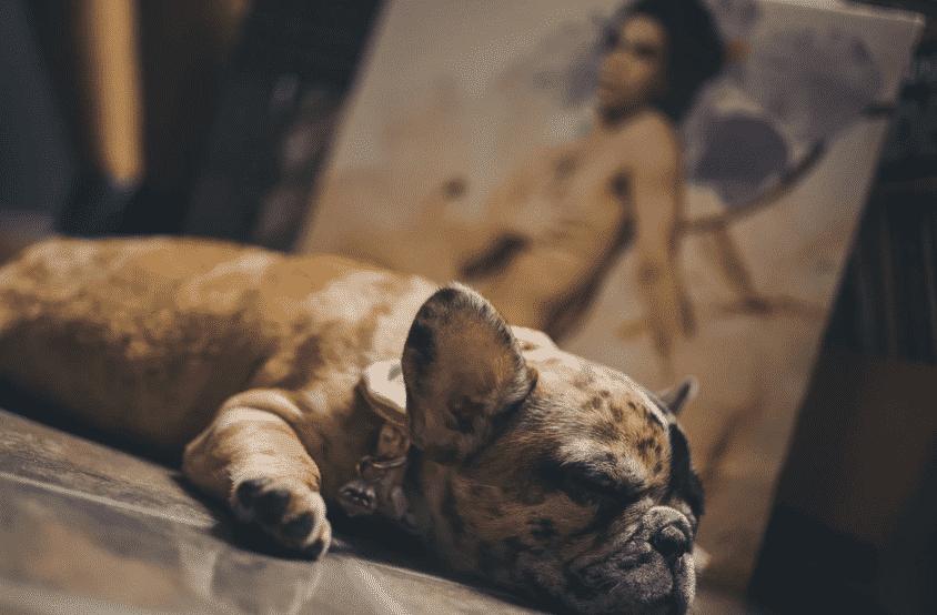 arrêter un bulldog qui ronfle