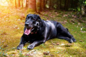 que faire pour un chien qui respire rapidement