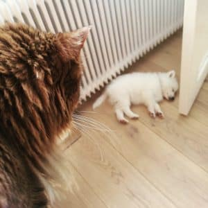 bouledogue et chat