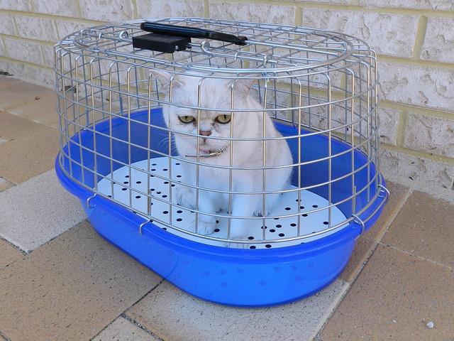 Astuces pour Déménager Votre Chat Sans Soucis