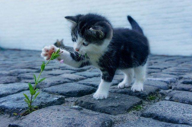 7 Plantes Que les Chats Adorent
