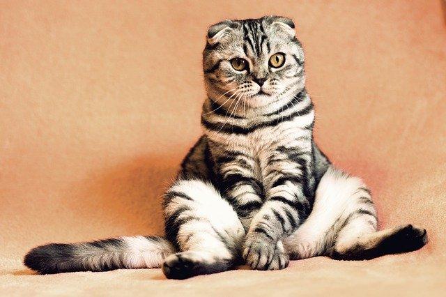 Top 200 des Meilleurs Noms pour Votre Chat
