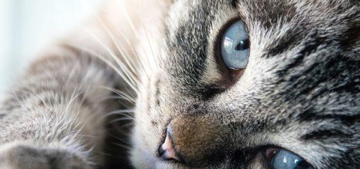 10 Etapes Pour Choisir le Bon Chat Pour Vous