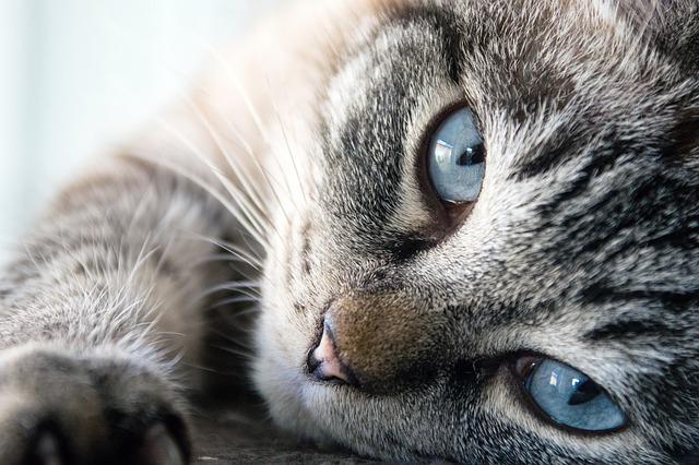 Pourquoi les Chats Sont Mignons : 10 Raisons Logiques (+ images…)