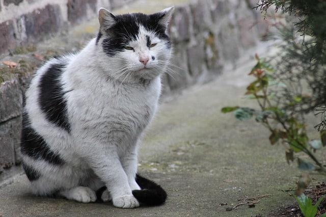 Votre Chat Miaule la Nuit