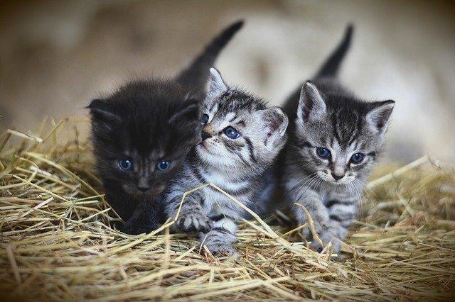 Quelle est la nourriture Préférée des Chats