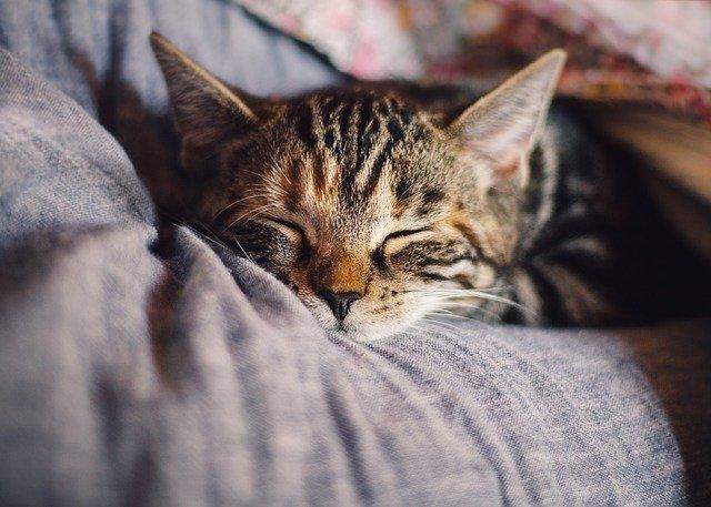 Pourquoi les Chats Sont Si Bizarres