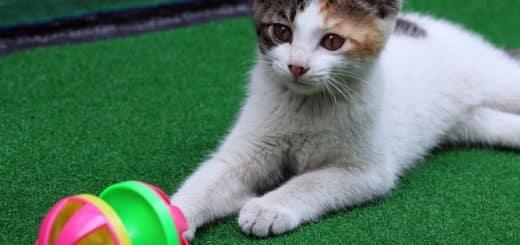4 Raisons de Jouer avec Votre Chat Maintenant