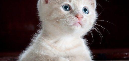 Votre Chat a-t-il Besoin d'un Arbre à Chats