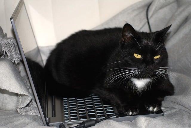 Pourquoi les Chats Sont Si Bizarres ?