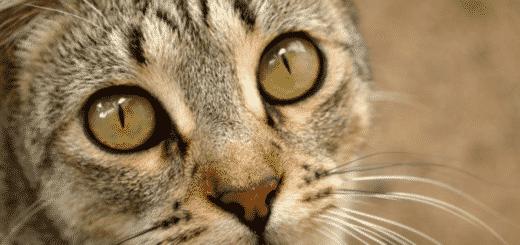 Pourquoi Mon Chat Me Fixe Sans Cesse ? (le secret enfin révélé !)