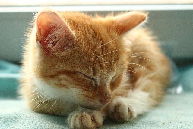 Top 10 Positions Typiques des Chats (et ce qu'elles veulent dire)