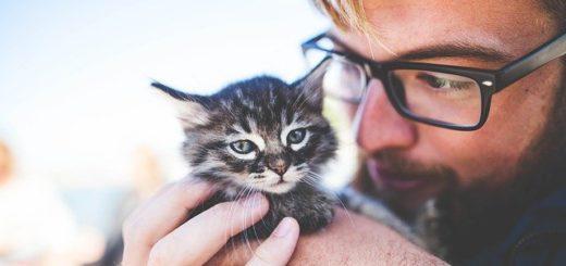 Est-ce Que Votre Chat Comprend Quand Vous Etes Triste ? (ou pleurez)