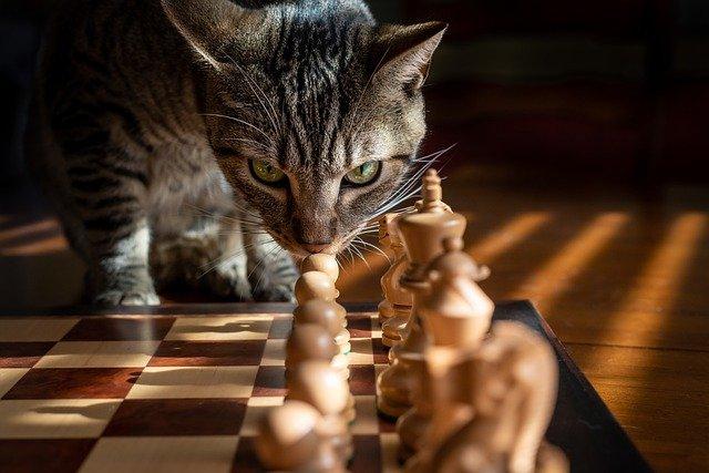 Est-ce Que les Chats se Rappellent des Gens ? (quelle durée pour leur mémoire)