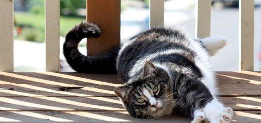 Les Chats les Plus Affectueux et Calins