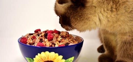 Nourriture Pour Chat : Que Dois-je Lui Donner à Manger ?