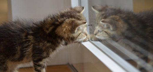 Pourquoi Mon Chat Fait Ses Griffes Sur Mon Mur ?