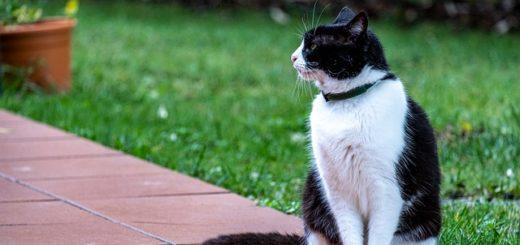 Phéromones pour Chats : Est-ce qu'elles marchent vraiment ?