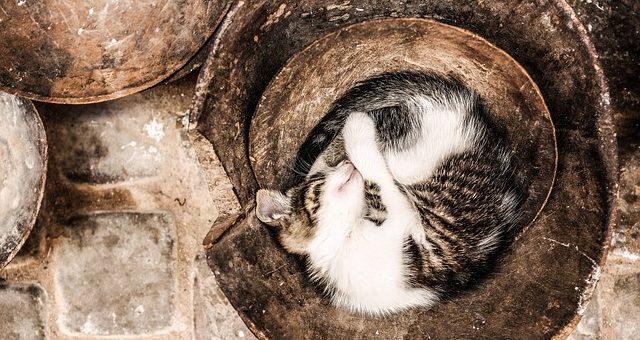 Pourquoi les Chats Dorment en Boule ?