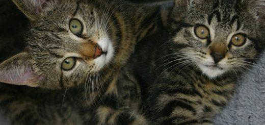 Pourquoi Adopter Deux Chatons Plutôt qu'Un Seul