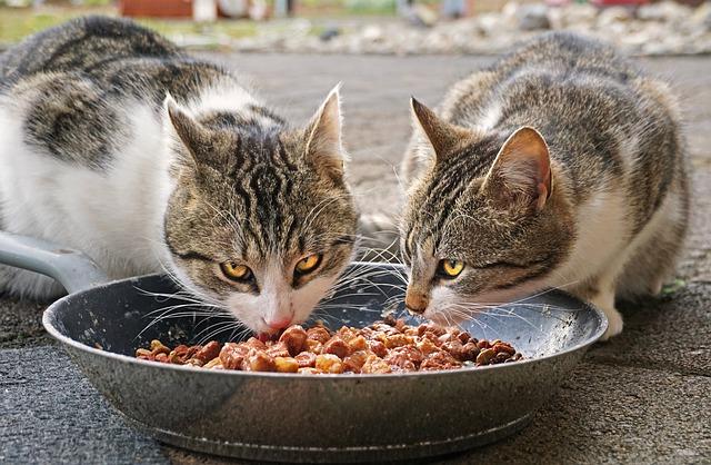 Mon Chat Mange Tout ce que les Humains Mangent