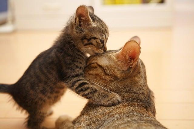 Les Chats Ont Ils Une Personne Préférée