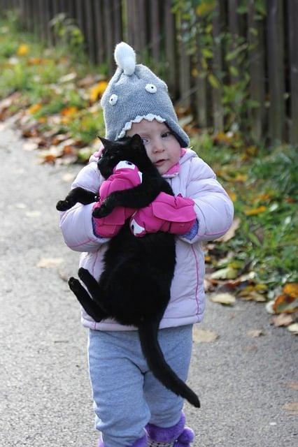 Quel Age Idéal Pour le Chat Que Je Vais Adopter ? (ou chaton)